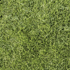 28104-H Quilting Treasures Open Air GRASS OLIVE