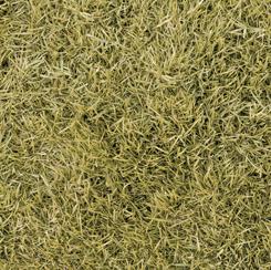 Open Air for QT Fabrics GRASS DRIED GRASS 28104-S