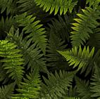 Open Air FERNS FOREST