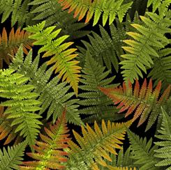 Open Air for QT Fabrics FERNS GREEN/MULTI 28105-GX
