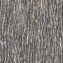 Quilting Treasures - Open Air - Bark - 1649 28112 KX - Gray