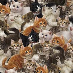 Literary Kitties