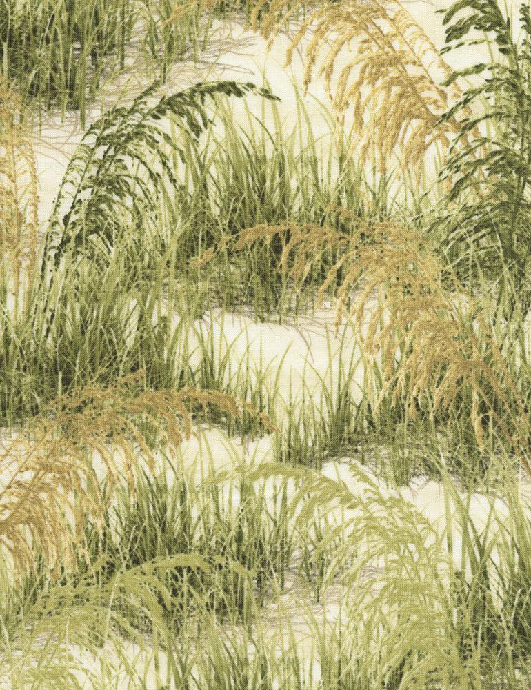 Beach Grass C5354