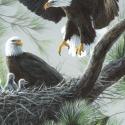 Windham Fabrics Eagles Nest Panel 50062DP '