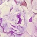 Romance 50216-6