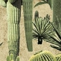 Windham Fabrics - Adobe by Whistler Studios - Sand Cacti